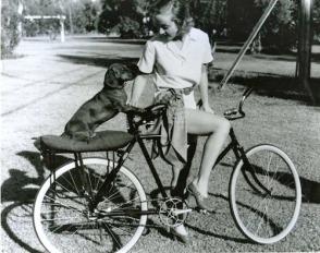 dachshund-lombard-3