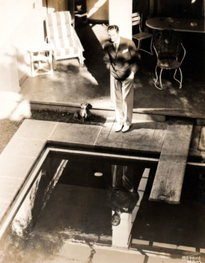 dachshund-powell-3